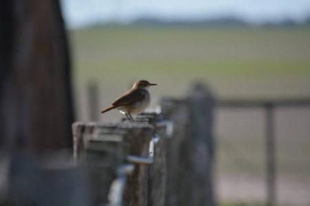 Avistamiento de aves en Estancia El Cangüé